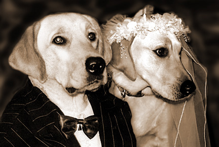 Pulte & Centex:  Two Dog Stocks Finally Get Hitched