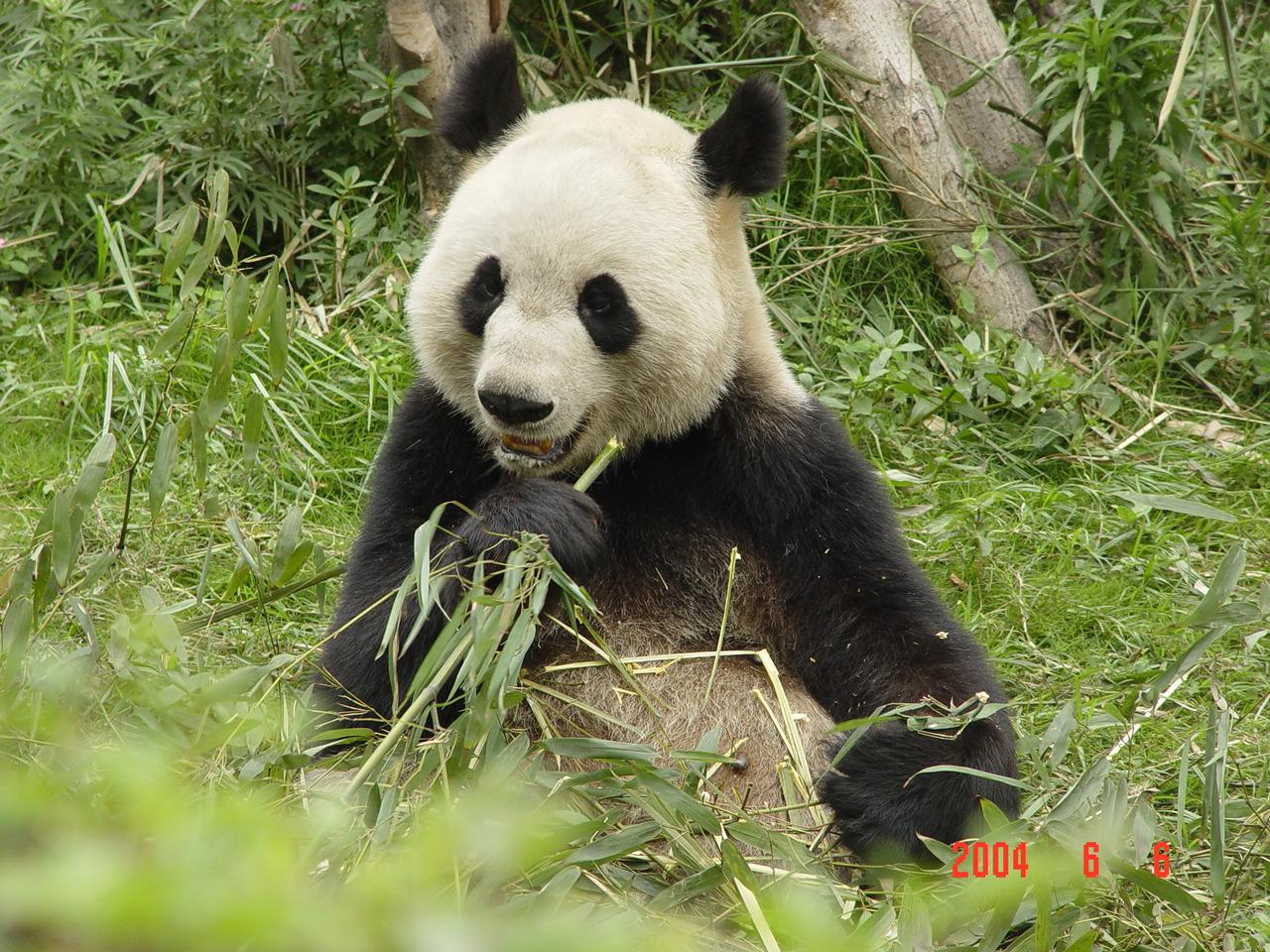 """Green Shoots"" Are For Pandas  ""Green Sho..."
