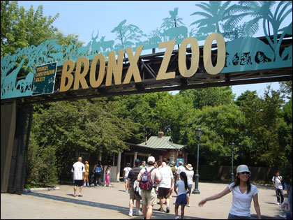 layoffs-at-bronx-zoo